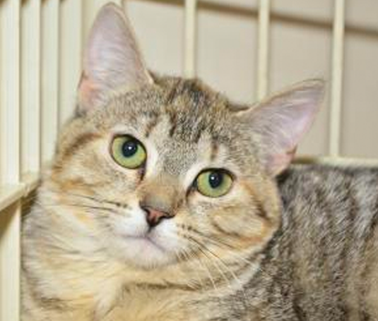Lakeland Animal Shelter - Cats