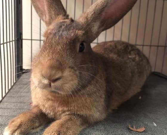 Lakeland Animal Shelter - Rabbits adopt