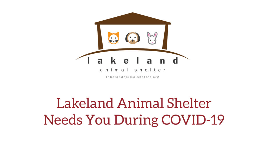 how you can help animals during covid-19